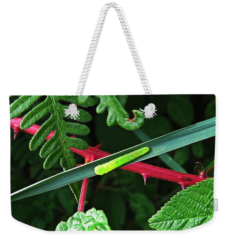 Caterpillar Weekender Tote Bag featuring the photograph Nature's Highway by MTBobbins Photography