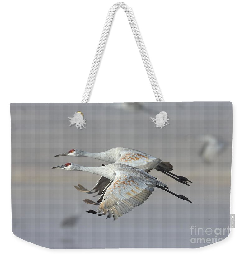 Sanhill Crane Weekender Tote Bag featuring the photograph Neck N Neck by Bryan Keil