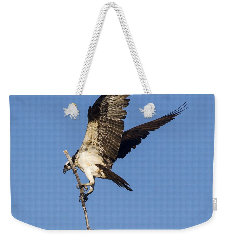 Doug Lloyd Weekender Tote Bag featuring the photograph Nest Building by Doug Lloyd
