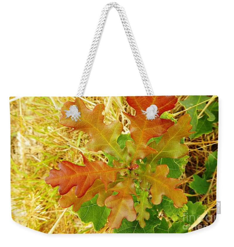 Nature Weekender Tote Bag featuring the photograph New Arrival by Loreta Mickiene