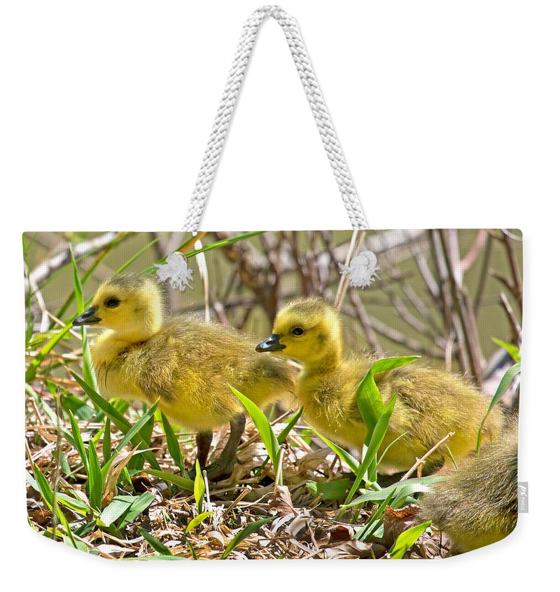 Goose Weekender Tote Bag featuring the photograph New Beginnings by Betsy Knapp