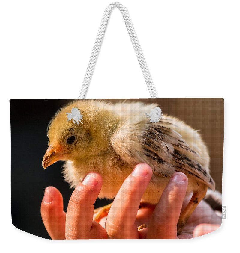 Beak Weekender Tote Bag featuring the photograph New Chick by Gaurav Singh