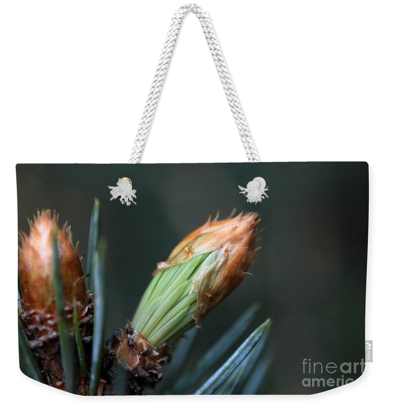 Pine Weekender Tote Bag featuring the photograph New Growth - Hats Off by Kenny Glotfelty
