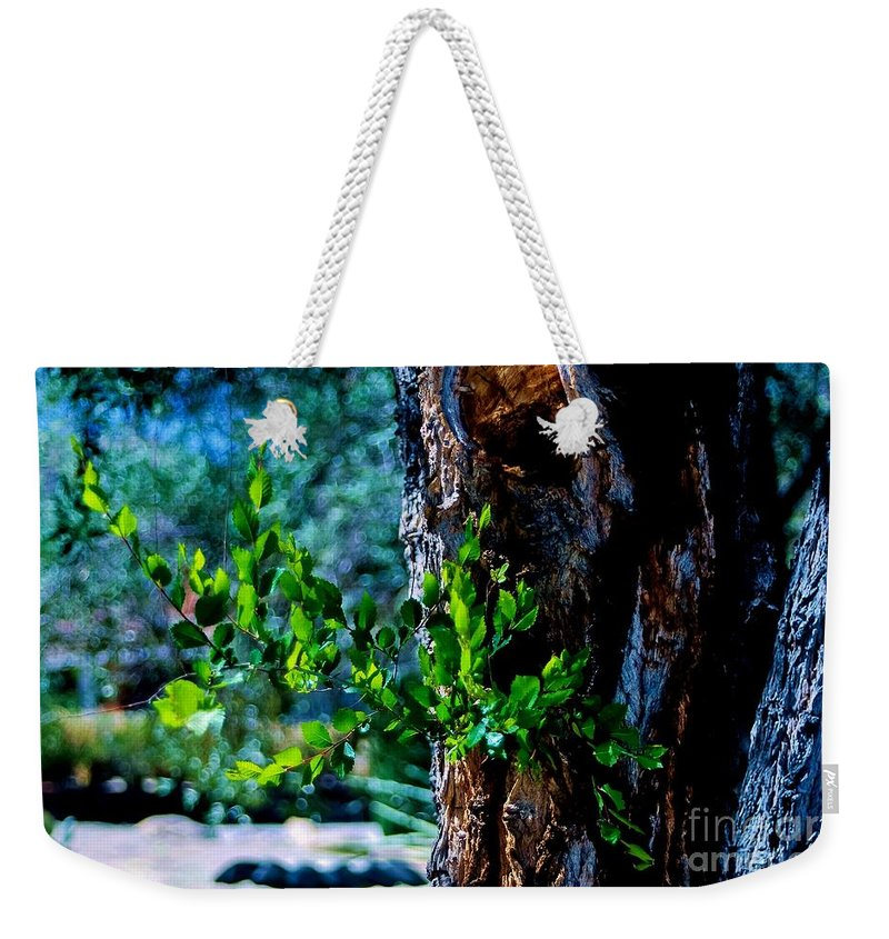 Spring Weekender Tote Bag featuring the photograph New Life by Angela J Wright