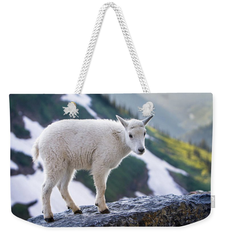 Mountain Goat Kid Weekender Tote Bag featuring the photograph New Life In The High Country by Jack Bell