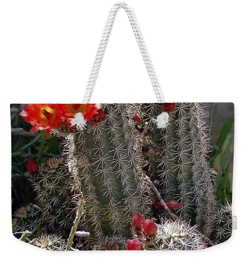 Cactus Weekender Tote Bag featuring the photograph New Mexico Cactus by Kurt Van Wagner