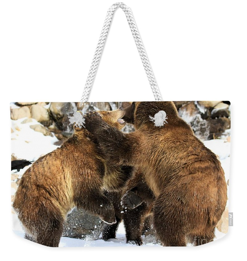 Grizzly Bear Weekender Tote Bag featuring the photograph New Years Celebration by Adam Jewell