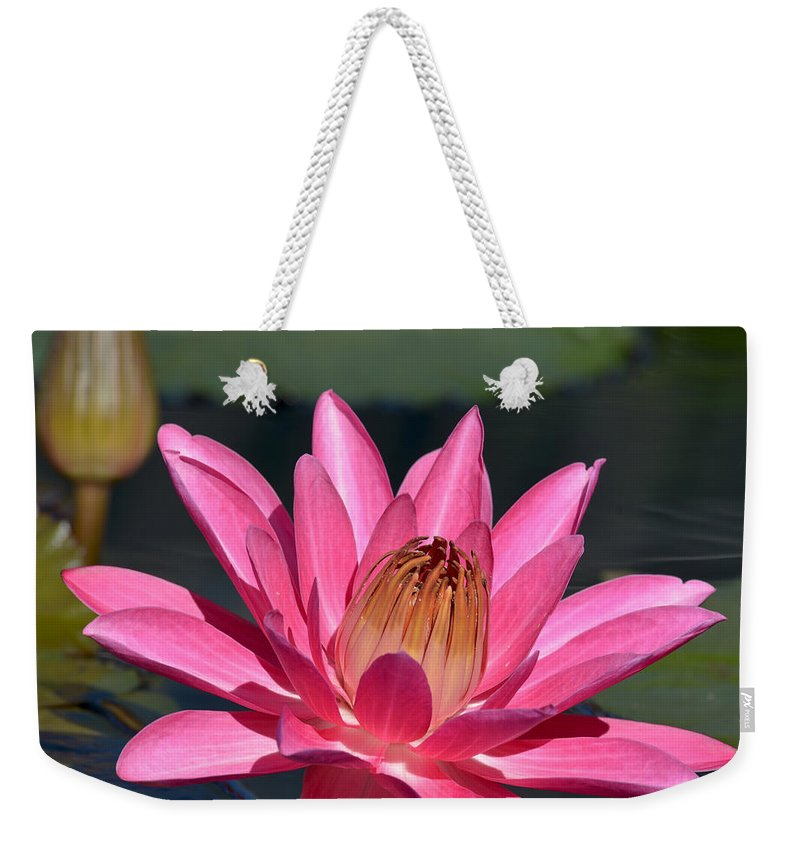 Water Lily Weekender Tote Bag featuring the photograph Night Bloomer 3223 by Terri Winkler