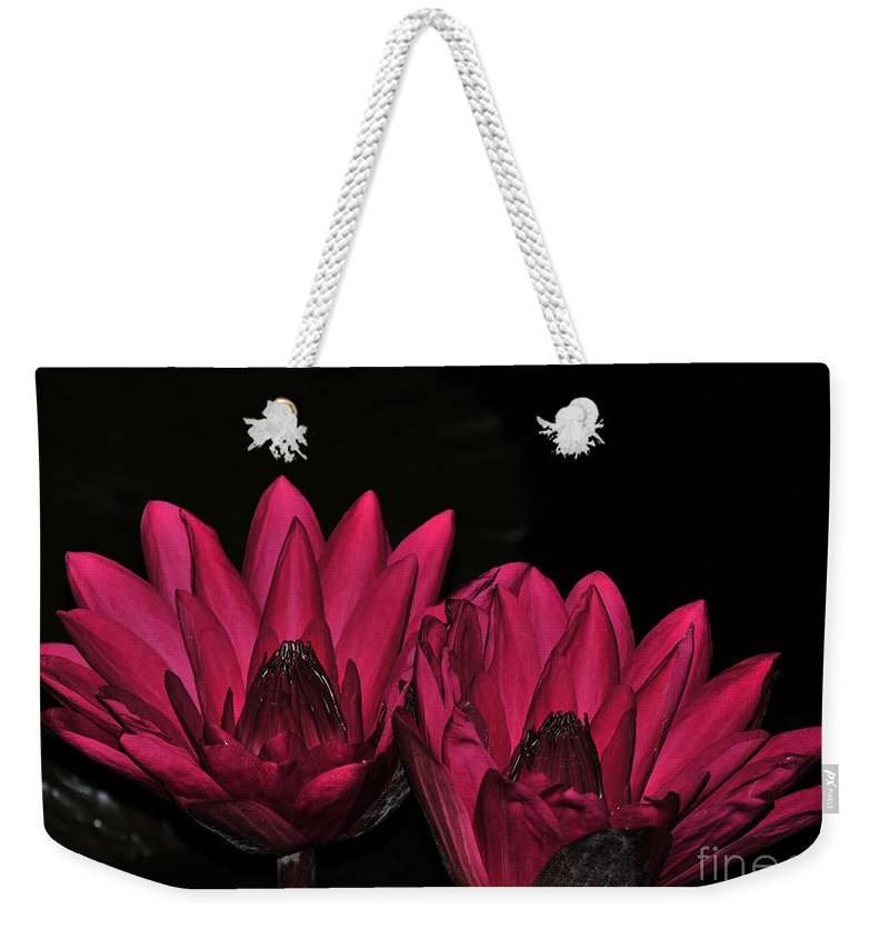 Lily Weekender Tote Bag featuring the photograph Night Blooming Lily 1 Of 2 by Terri Winkler
