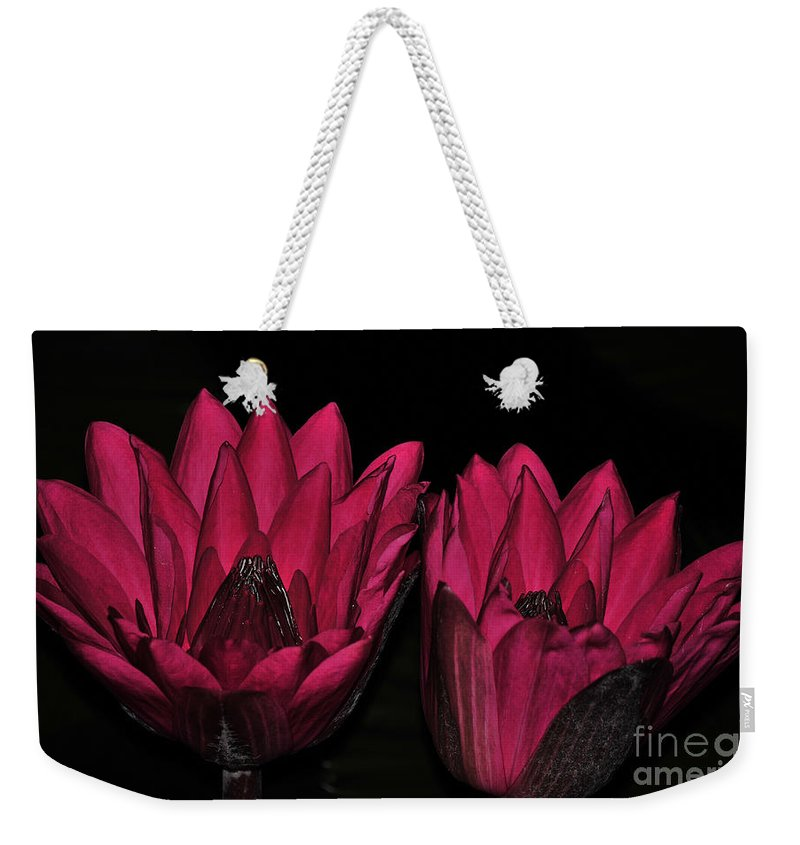 Lily Weekender Tote Bag featuring the photograph Night Blooming Lily 2 Of 2 by Terri Winkler
