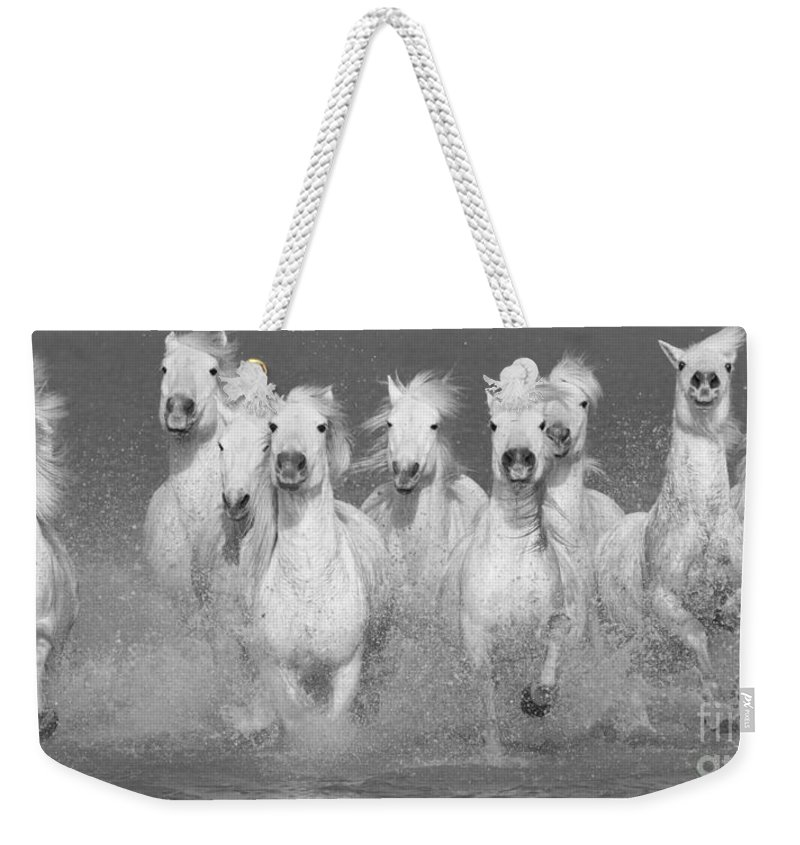 Horse Weekender Tote Bag featuring the photograph Nine White Horses Run by Carol Walker