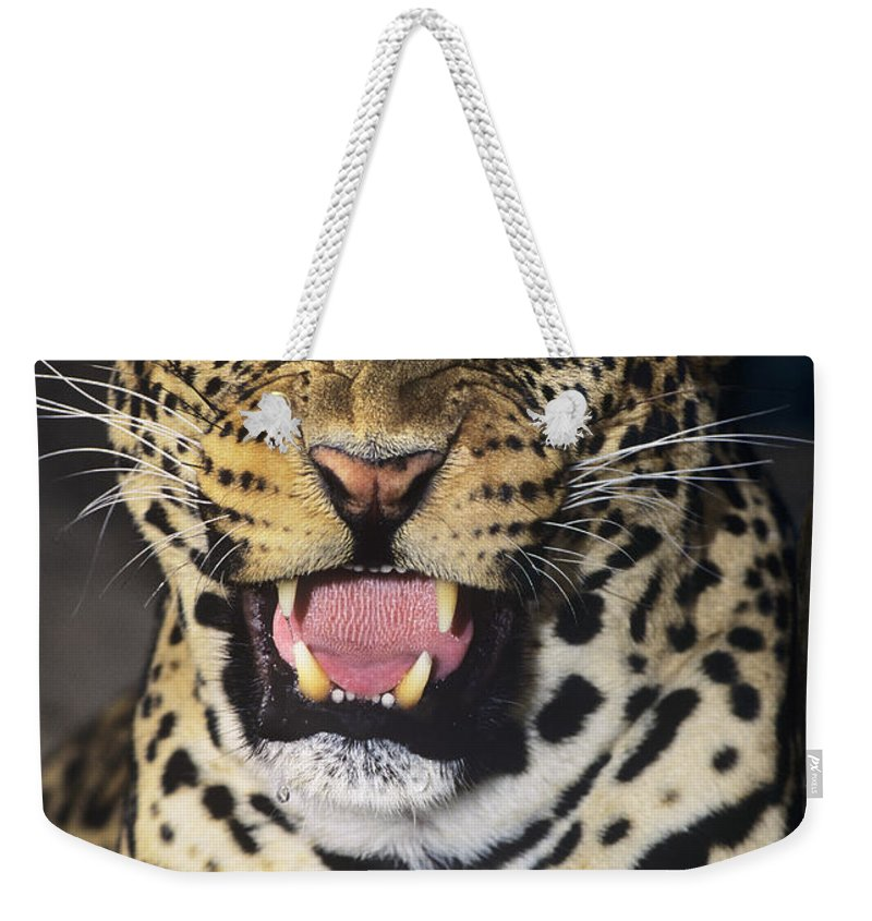 African Leopard Weekender Tote Bag featuring the photograph No Solicitors African Leopard Endangered Species Wildlife Rescue by Dave Welling