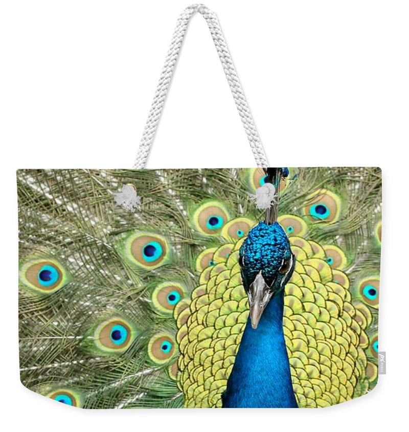 Amazing Weekender Tote Bag featuring the photograph Noble Peacock by Sabrina L Ryan