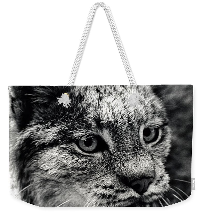 Animal Weekender Tote Bag featuring the photograph North American Lynx In The Wild. by Bob Orsillo