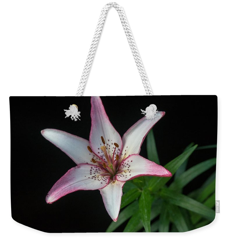 Alberta Weekender Tote Bag featuring the photograph North Star 6 by Douglas Barnett