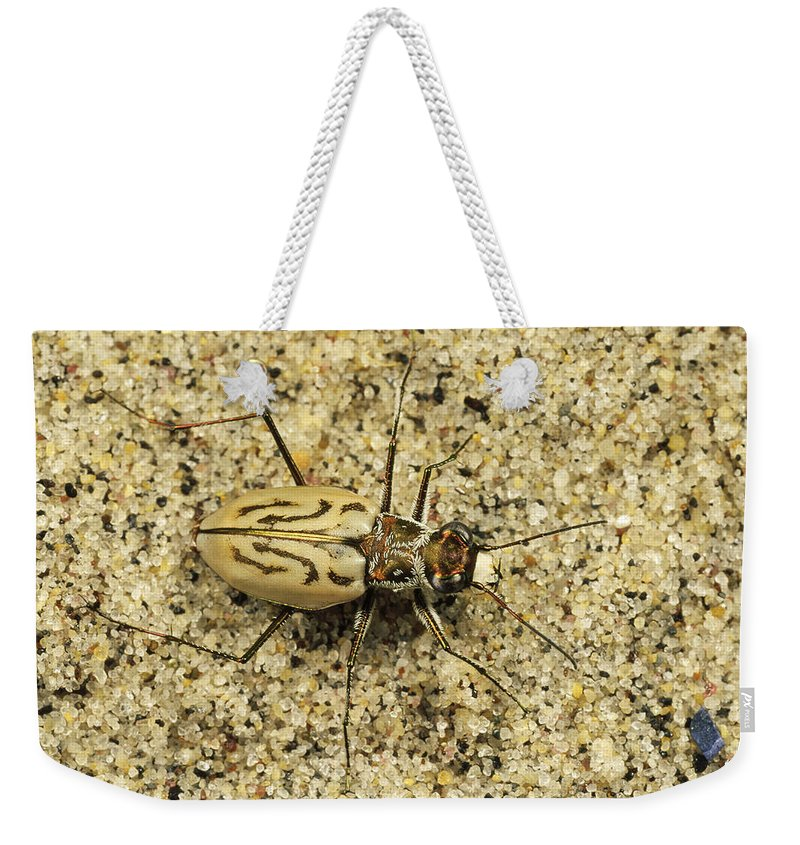 Feb0514 Weekender Tote Bag featuring the photograph Northern Beach Tiger Beetle Marthas by Mark Moffett