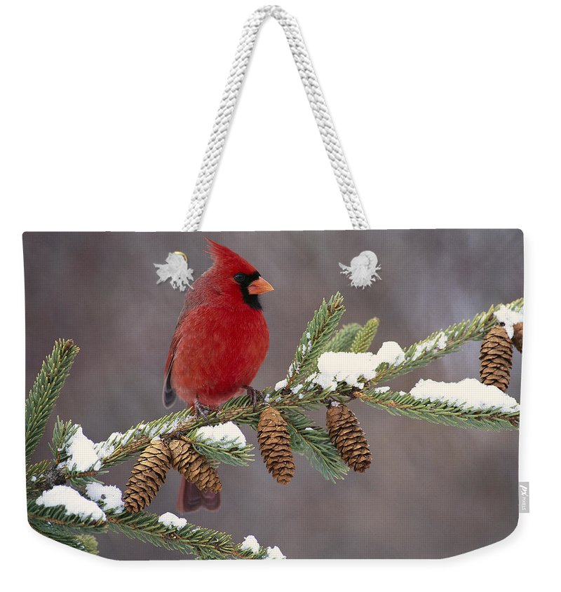 00447547 Weekender Tote Bag featuring the photograph Cardinal and Pine Cones by Steve Gettle