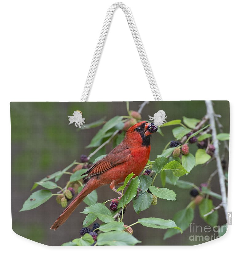 Northern Cardinal Weekender Tote Bag featuring the photograph Northern Cardinal by Anthony Mercieca