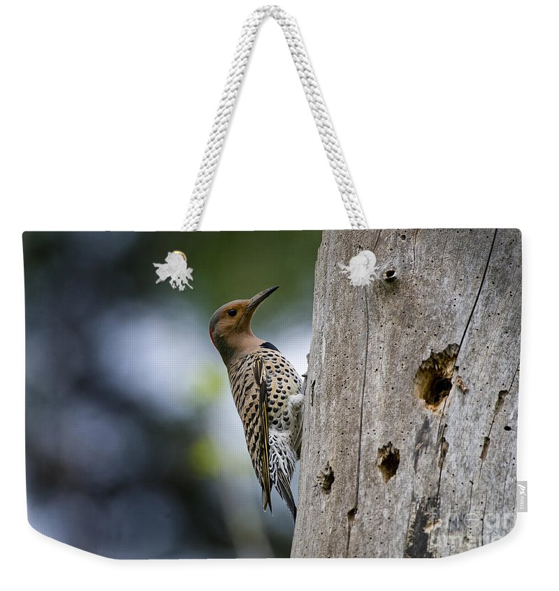 Northern Flicker Weekender Tote Bag featuring the photograph Northern Flicker Pictures 35 by World Wildlife Photography