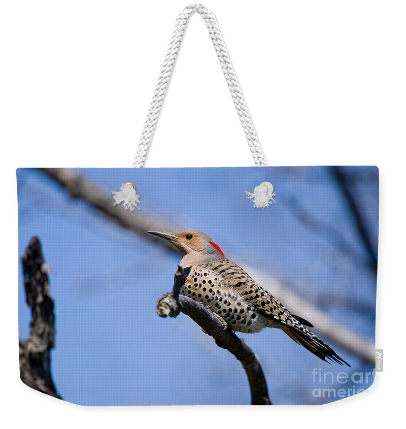Northern Flicker Weekender Tote Bag featuring the photograph Northern Flicker Pictures 5 by World Wildlife Photography