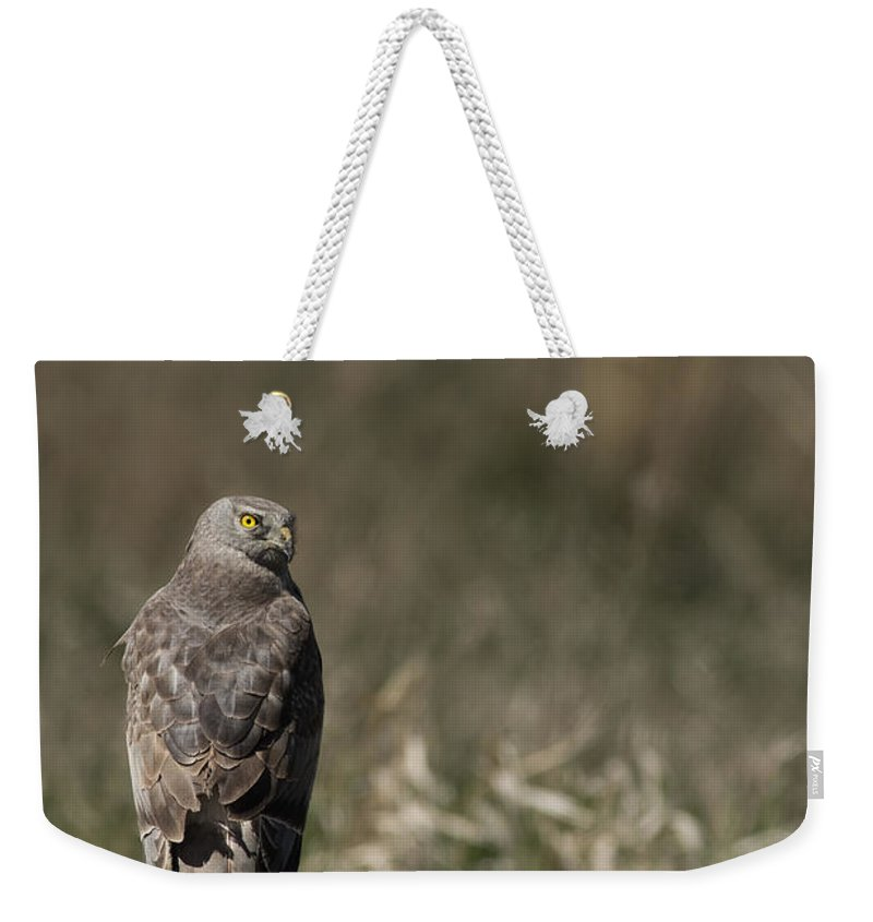 Harrier Weekender Tote Bag featuring the photograph Northern Harrier At Rest by Michael Winn