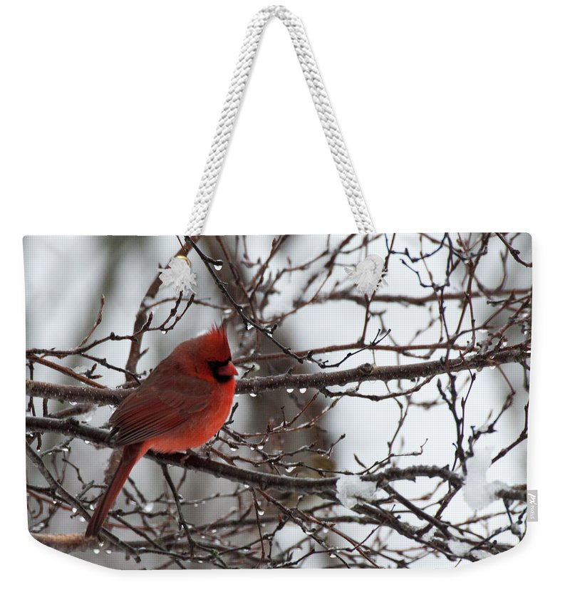 Cardinal Weekender Tote Bag featuring the photograph Northern Red Cardinal In Winter by Jeff Folger