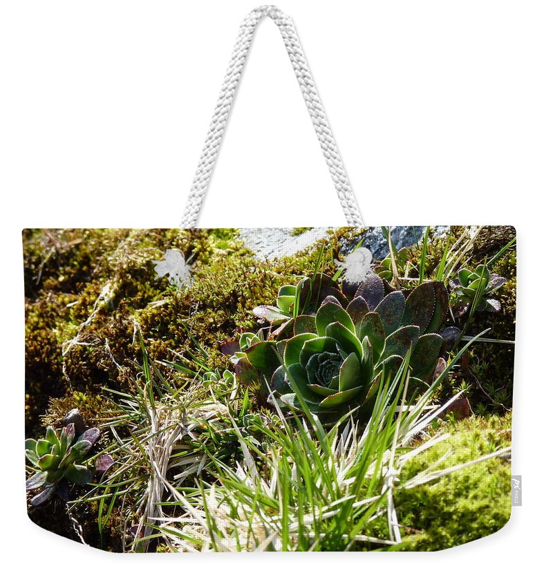 Weekender Tote Bag featuring the photograph Northern Rose by Katerina Naumenko