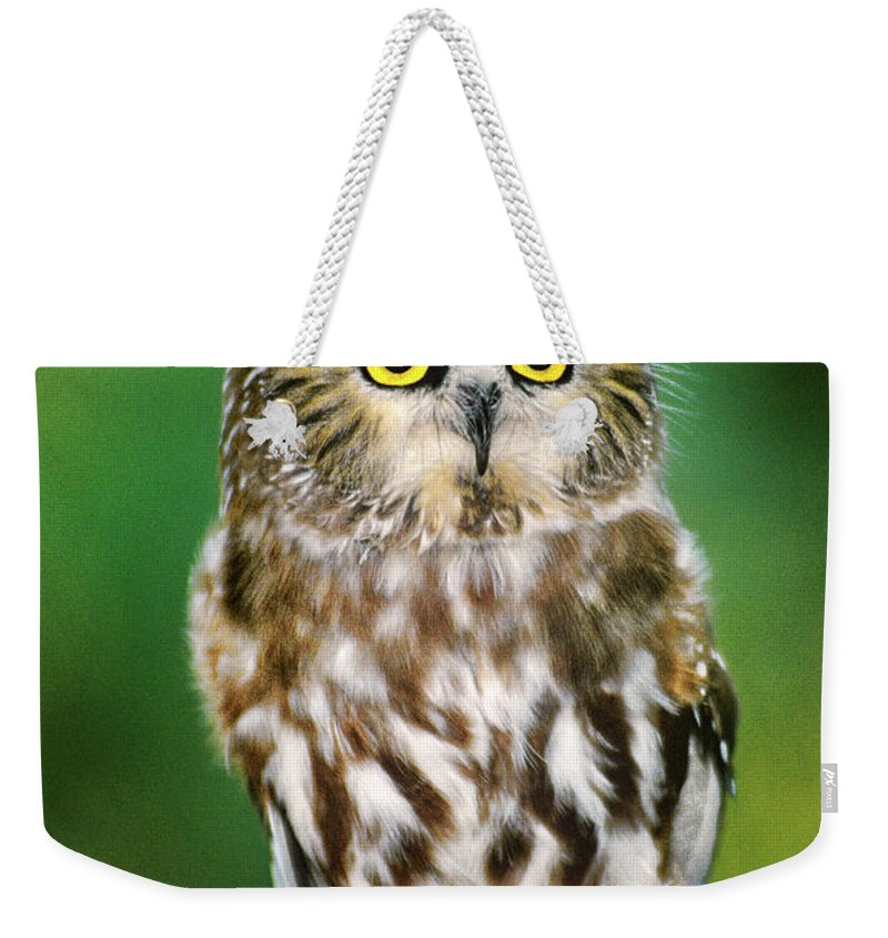Dave Welling Weekender Tote Bag featuring the photograph Northern Saw-whet Owl Aegolius Acadicus Wildlife Rescue by Dave Welling