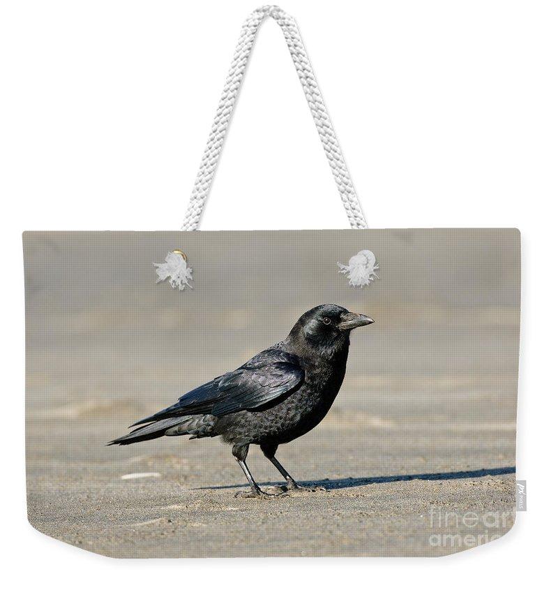 Corvidae Weekender Tote Bag featuring the photograph Northwestern Crow by Anthony Mercieca