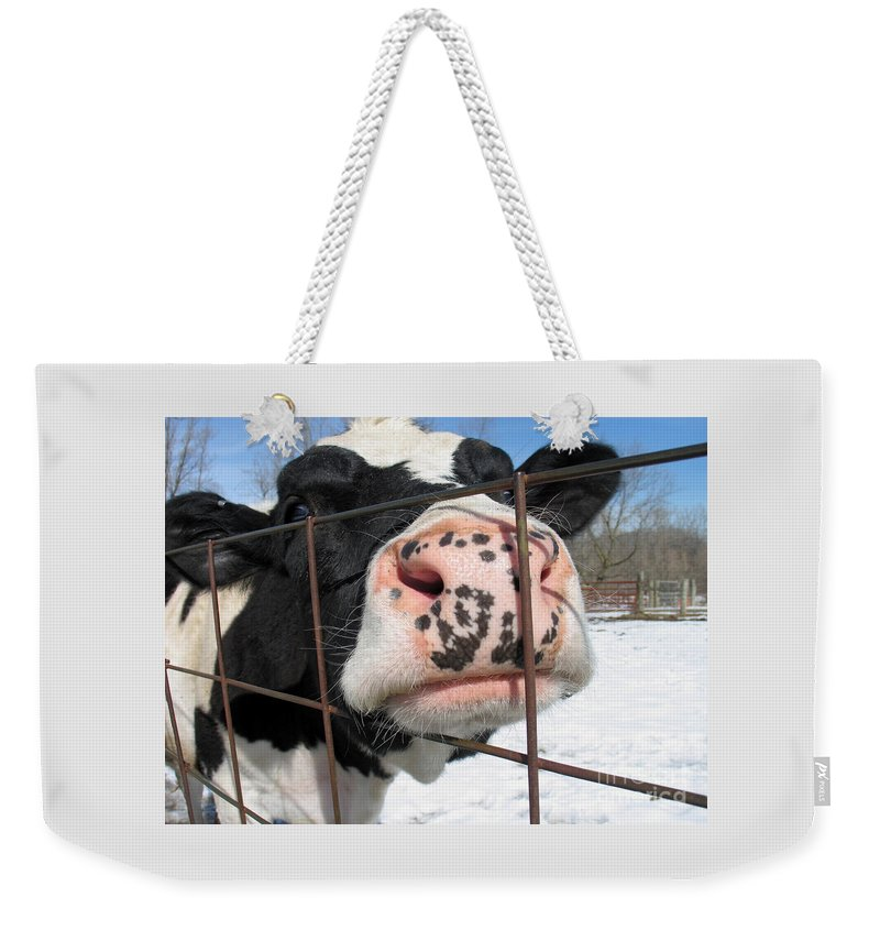Cow Weekender Tote Bag featuring the photograph Nosy by Ann Horn
