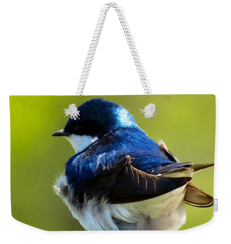 Tree Weekender Tote Bag featuring the photograph Not Speaking To You by Art Dingo