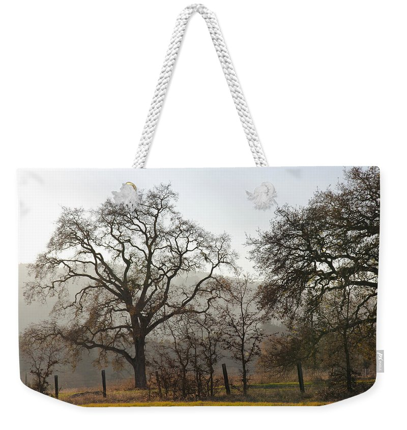 Nature Weekender Tote Bag featuring the photograph Oak Sillouette by Noa Mohlabane