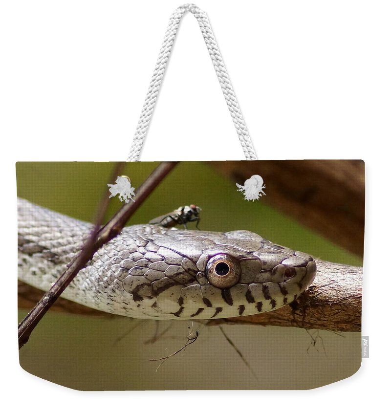 Snake Weekender Tote Bag featuring the photograph Oak Snake And Fly by Paul Wilford