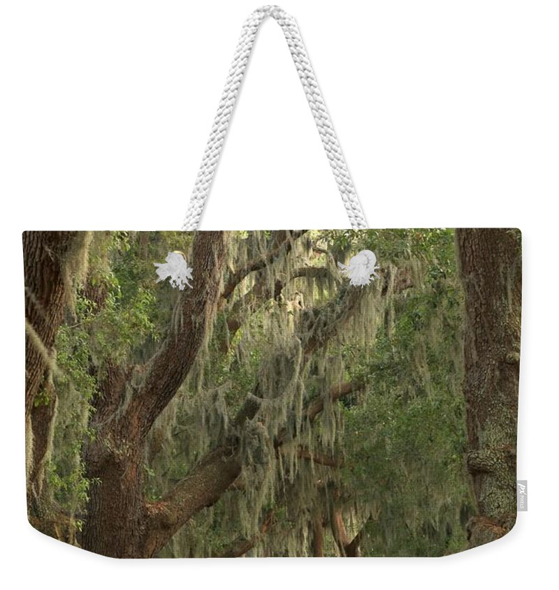 Avenue Of The Oaks Weekender Tote Bag featuring the photograph Oaks Of Georgia by Adam Jewell