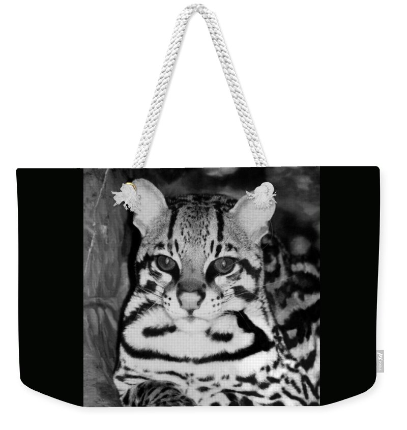 Ocelot In Repose Weekender Tote Bag featuring the photograph Ocelot In Repose by Ellen Henneke