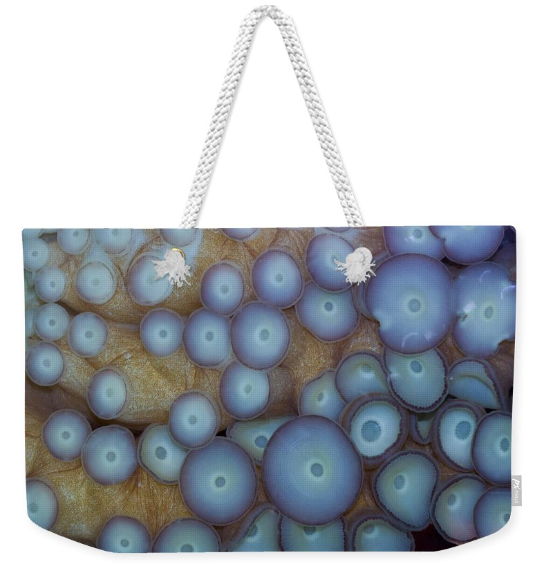 Octopus Weekender Tote Bag featuring the photograph Octo Circles by Eti Reid