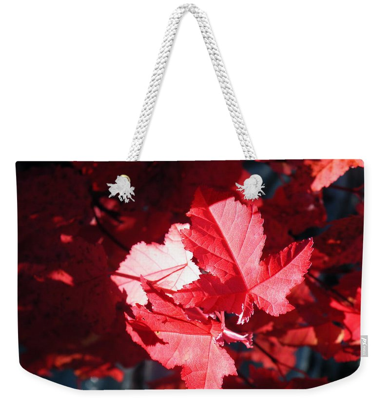 Oh Canada Weekender Tote Bag featuring the photograph Oh Canada by Brian Boyle