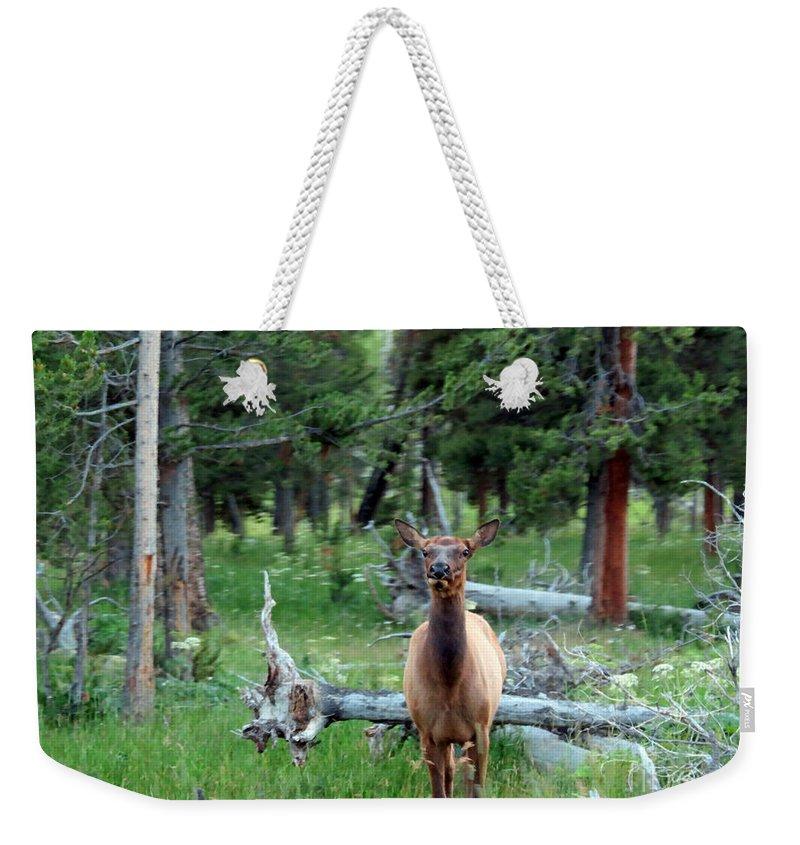 Mule Deer Weekender Tote Bag featuring the photograph Oh Dear I See A Deer by Ausra Huntington nee Paulauskaite