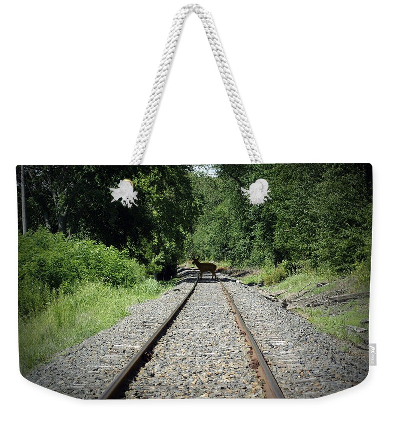 2d Weekender Tote Bag featuring the photograph Oh Deer by Brian Wallace