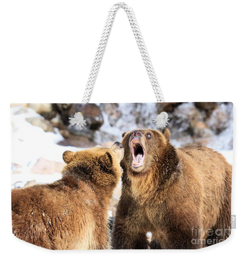 Grizzly Bear Weekender Tote Bag featuring the photograph Oh No You Didn't by Adam Jewell