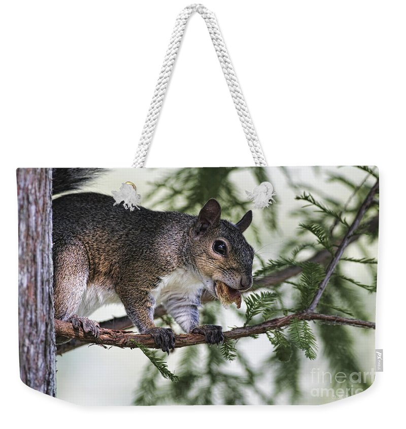 Squirrel Weekender Tote Bag featuring the photograph Ok You Caught Me by Deborah Benoit