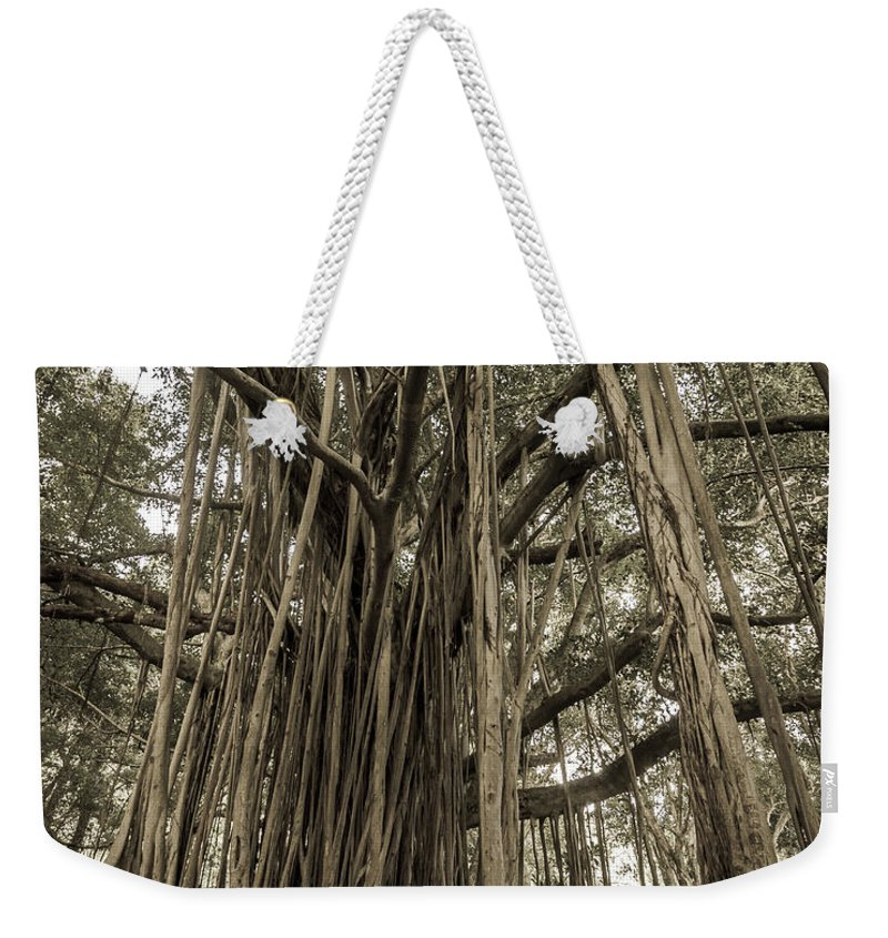 3scape Photos Weekender Tote Bag featuring the photograph Old Banyan Tree by Adam Romanowicz