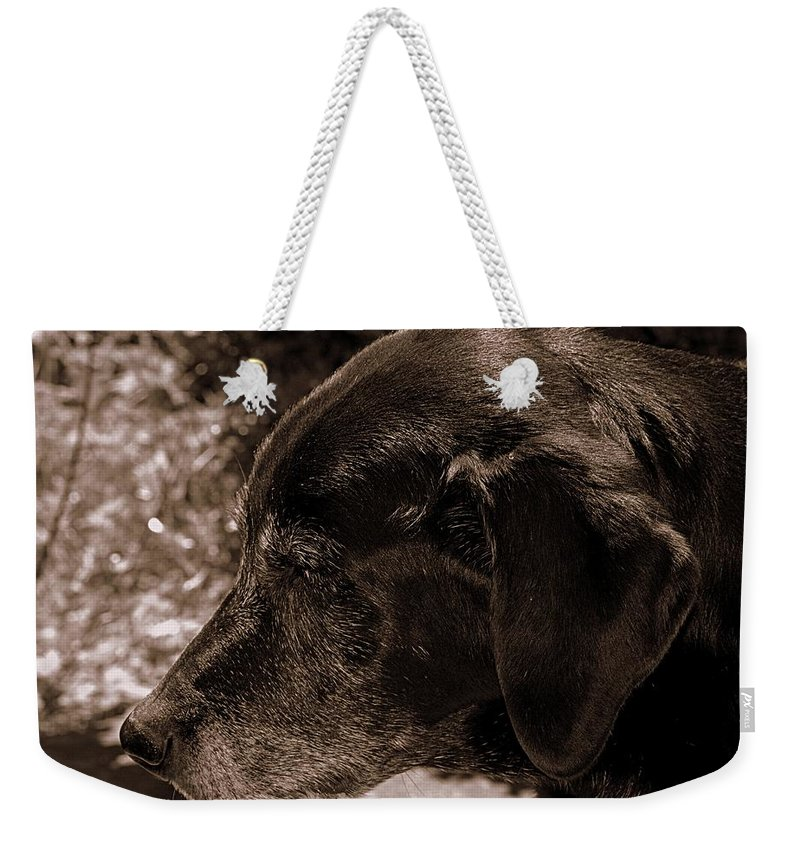 Labrador Weekender Tote Bag featuring the photograph Old Dog by Paul Wilford
