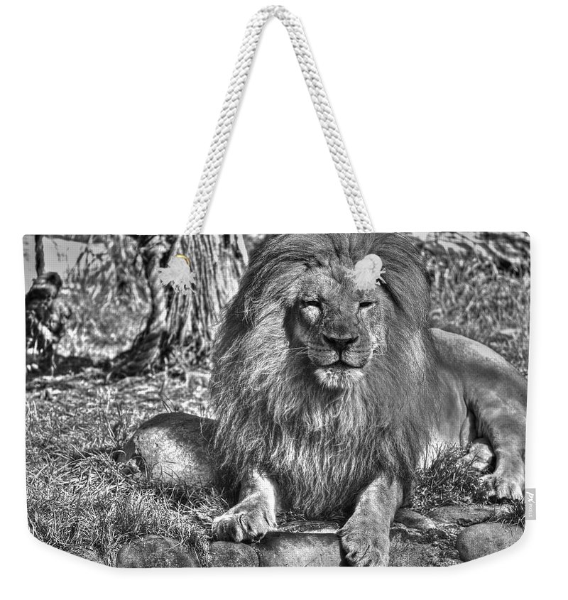 Animals Weekender Tote Bag featuring the photograph Old King In Black And White by SC Heffner