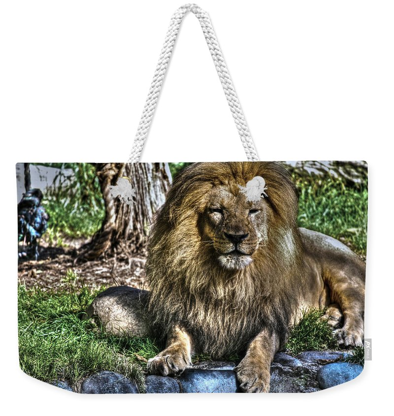 Animals Weekender Tote Bag featuring the photograph Old King Lion by SC Heffner