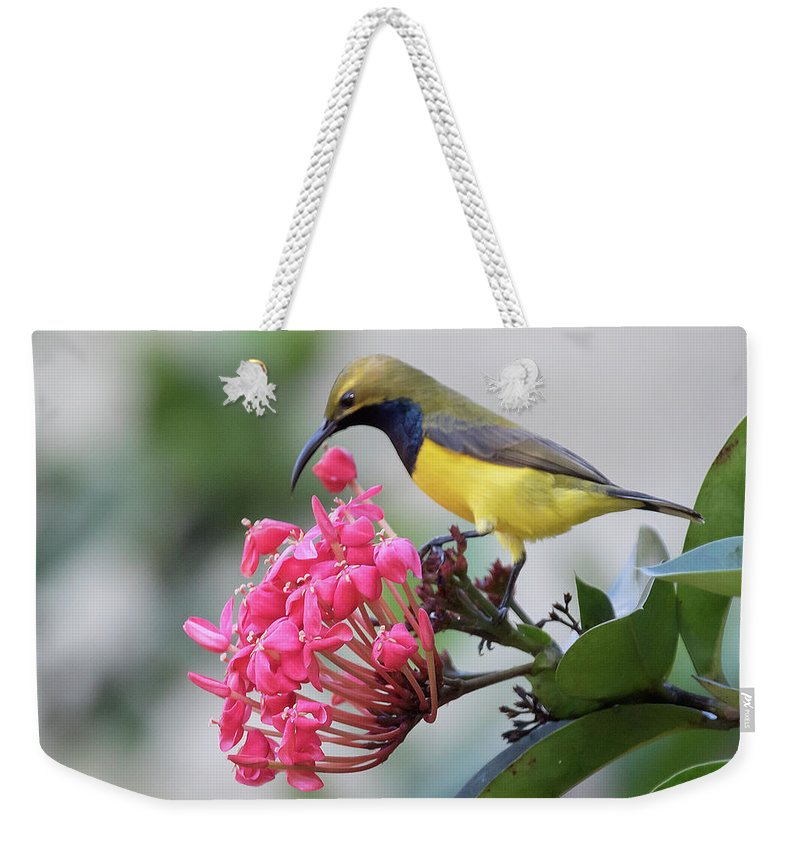 Nature Weekender Tote Bag featuring the photograph Olive-backed Sunbird Male With Flower by Hal Beral