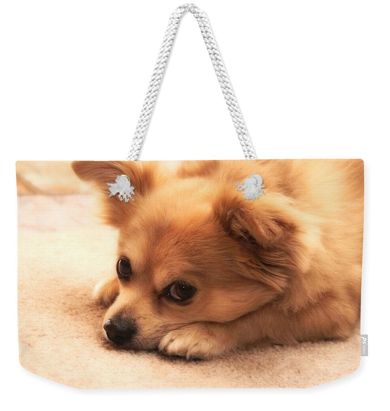 Dog Weekender Tote Bag featuring the photograph Oliver by Valerie Loop