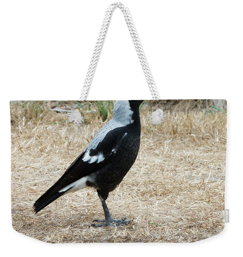 Tasmanian Weekender Tote Bag featuring the photograph On Parade by Steve Taylor