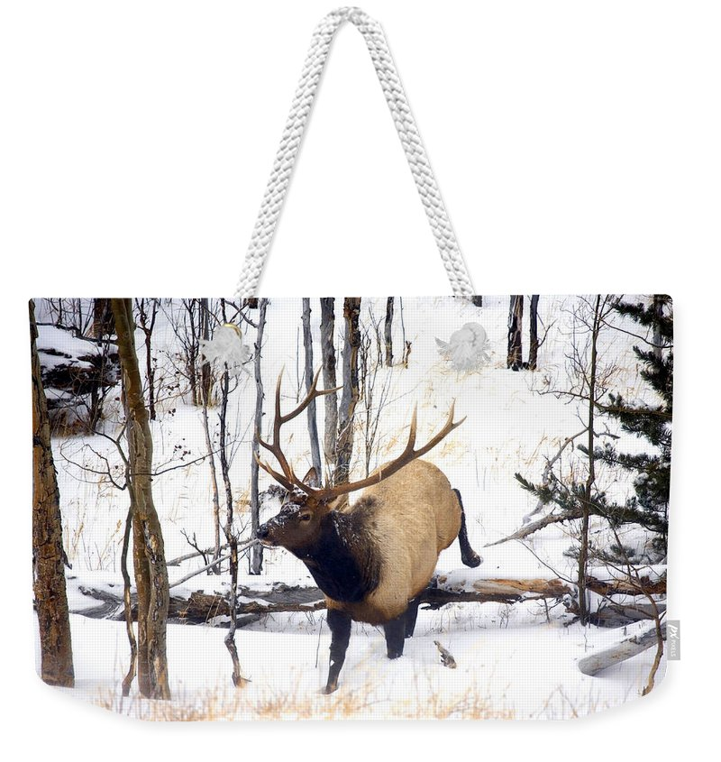 Elk Weekender Tote Bag featuring the photograph On The Move by Mike Dawson