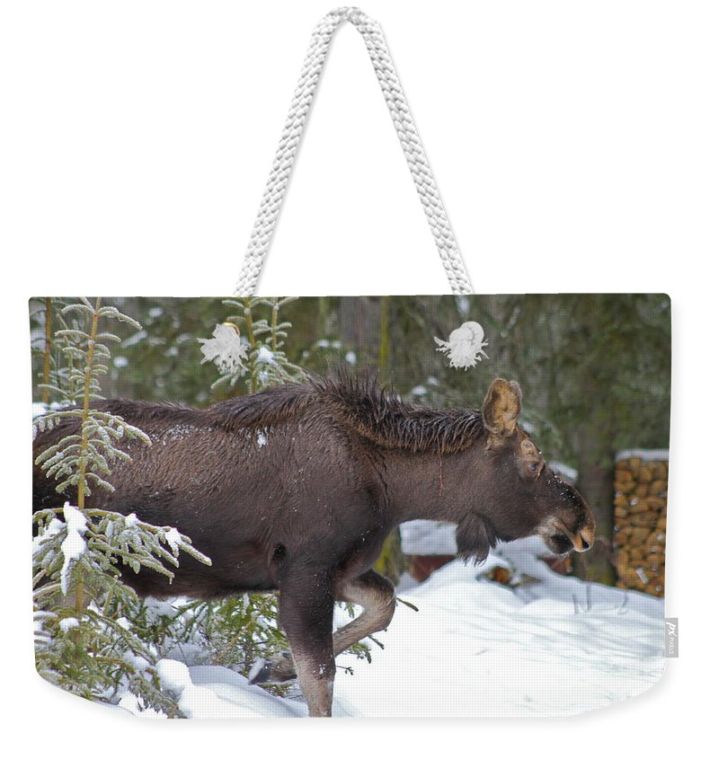 Moose Weekender Tote Bag featuring the photograph On The Move by Rick Monyahan